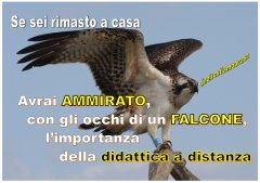Immagine_Falcone.JPG